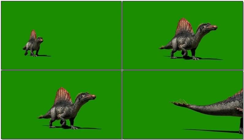 绿屏抠像棘龙恐龙视频素材