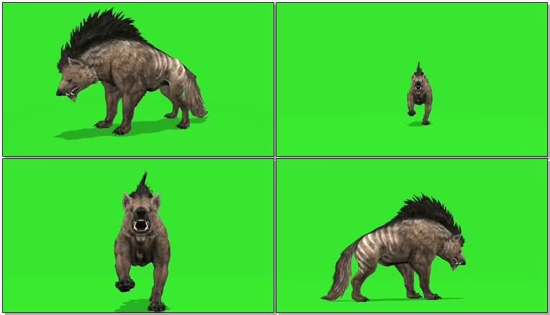 绿屏抠像奔跑的鬣狗视频素材