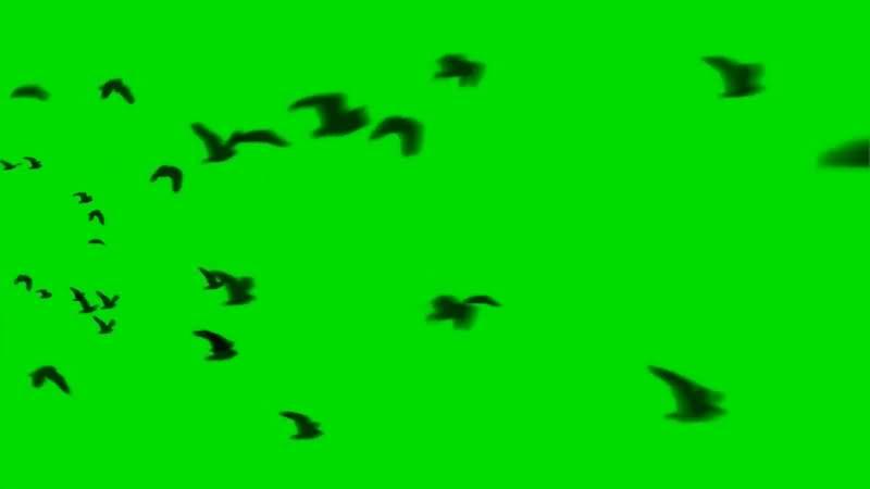 绿屏抠像飞行的鸟群视频素材