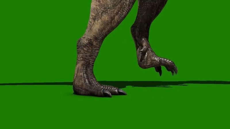 绿屏抠像恐龙霸王龙脚部走路特写视频素材