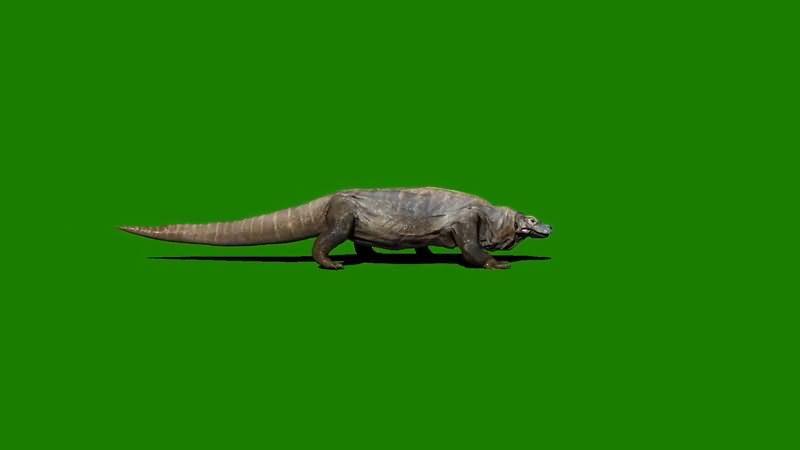 绿屏抠像爬行的科摩多巨龙视频素材