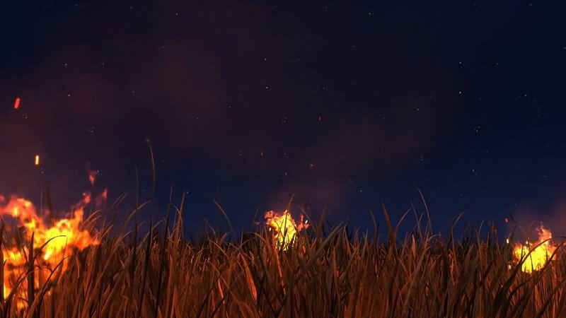 夜空里燃烧的野草视频素材