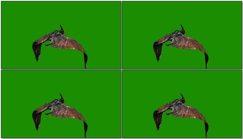 绿屏抠像飞行的翼龙视频素材