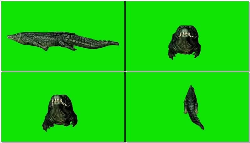 绿屏抠像游泳的鳄鱼视频素材
