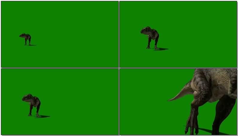 绿屏抠像怒吼的霸王龙视频素材