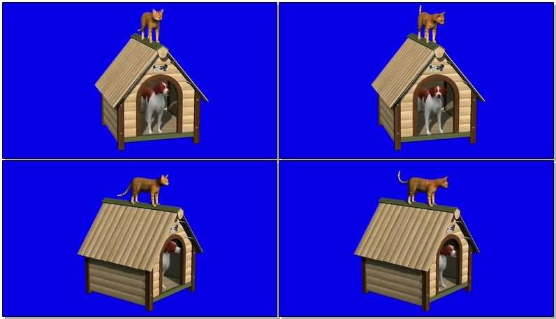 蓝屏抠像狗和猫视频素材