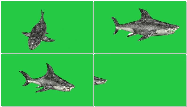绿屏抠像巨齿鲨鱼视频素材