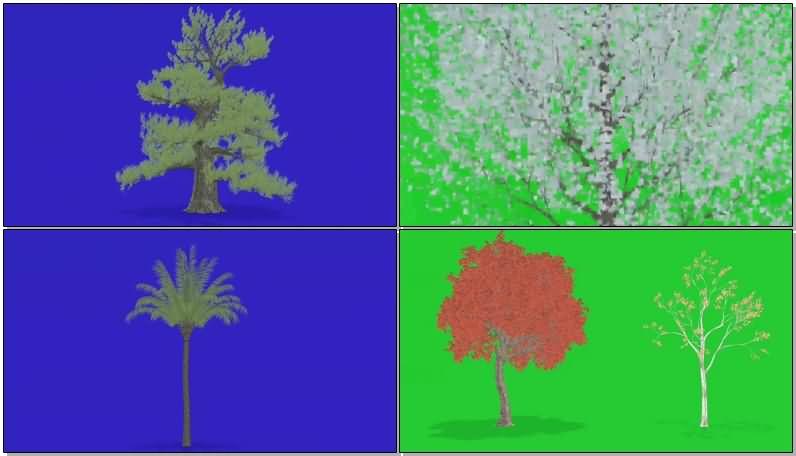 绿屏抠像狂风中的各种树木视频素材