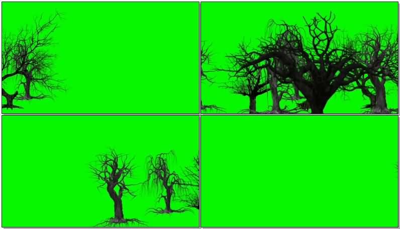 绿屏抠像枯萎的树木视频素材