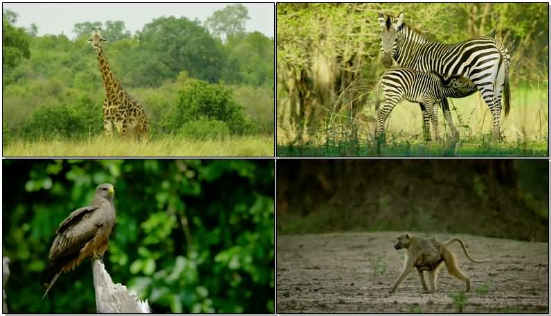 [4K]实拍草原上的野生动物.jpg
