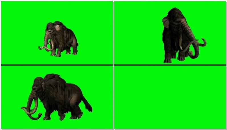 绿屏抠像行走的猛犸大象视频素材