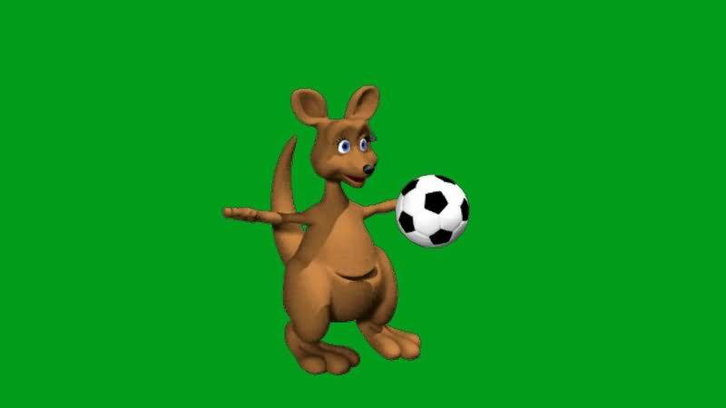 绿屏抠像踢足球的袋鼠视频素材