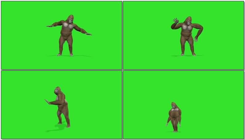 绿屏抠像跳舞的大猩猩视频素材