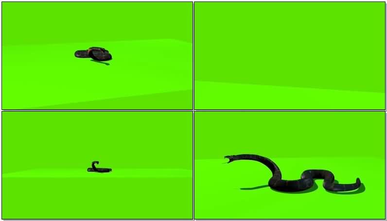 绿屏抠像爬行的蛇视频素材