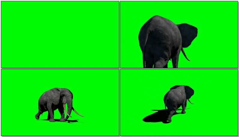 绿屏抠像大象视频素材