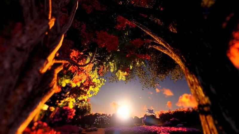 夕阳日落森林美景视频素材