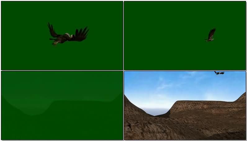 绿屏抠像飞行的秃鹫视频素材