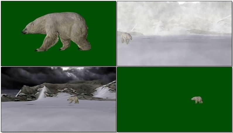 绿屏抠像北极熊视频素材
