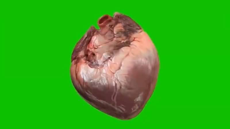 绿屏抠像跳动的心脏视频素材