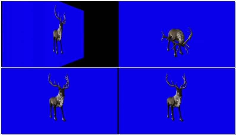 绿屏抠像奔跑的驯鹿视频素材