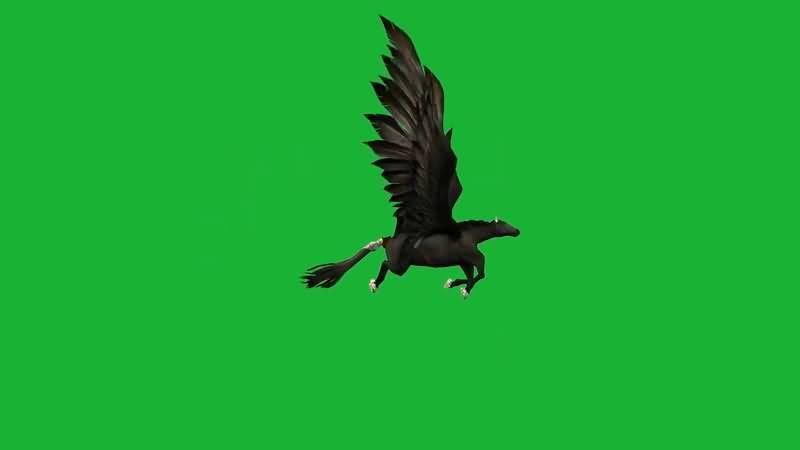 绿屏抠像飞行的黑马视频素材