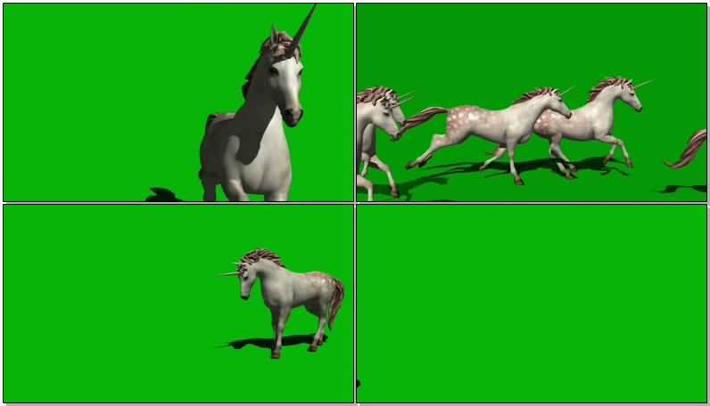 绿屏抠像奔跑独角白马视频素材