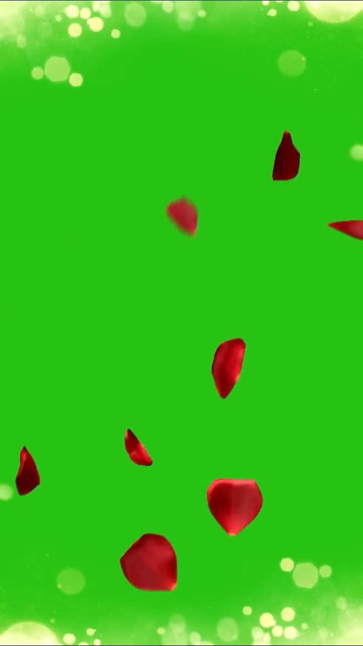 绿屏抠像竖版飘落的花瓣视频素材