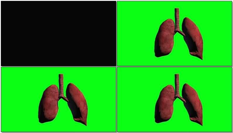 绿屏抠像呼吸的肺视频素材