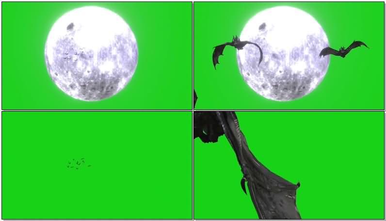 绿屏抠像满月阴森蝙蝠视频素材