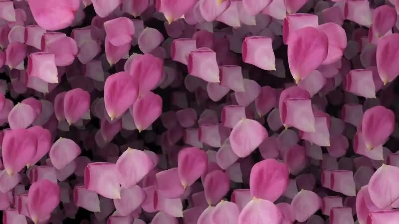 满屏飘落的粉色花瓣视频素材