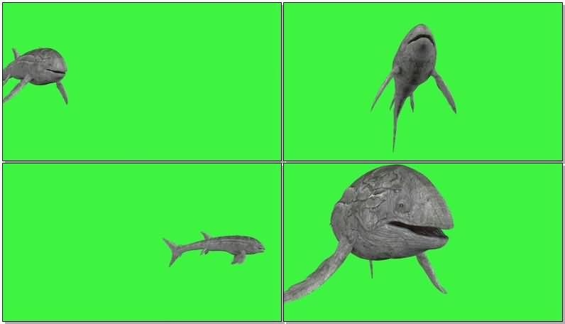 绿屏抠像巨大的鲸鱼视频素材
