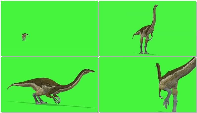 绿屏抠像似鸡龙恐龙视频素材