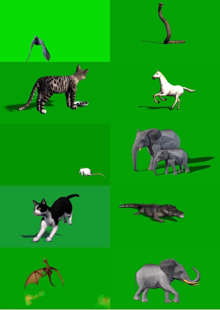绿屏_绿布_绿幕动物|飞禽|走兽|鱼类|鸟类|生物视频素材打包100部第二套