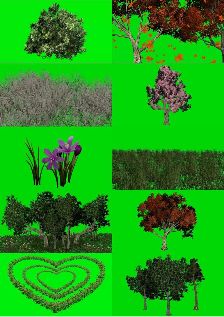 绿屏_绿布_绿幕花草树木|植物|花朵|树木|草地|森林|花卉视频素材打包100部第一套