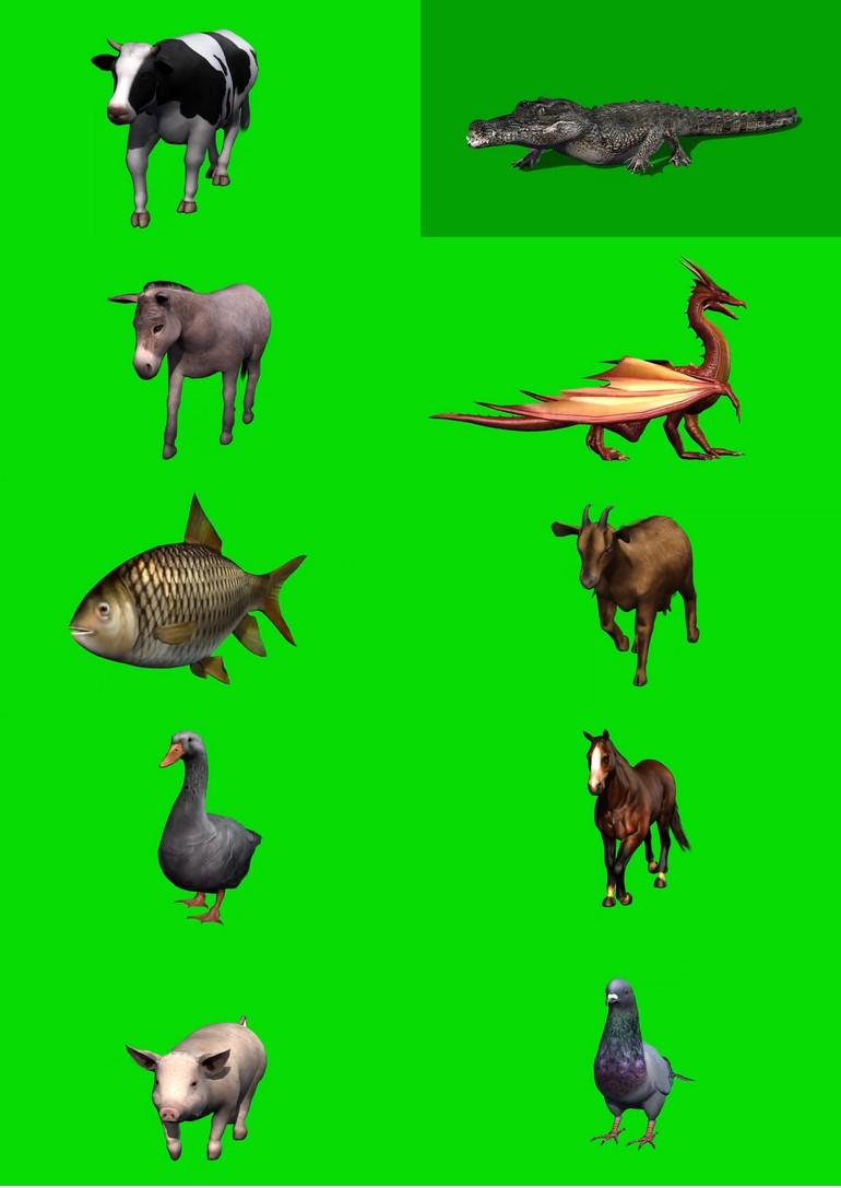 绿屏_绿布_绿幕动物|飞禽|走兽|鱼类|鸟类|生物视频素材打包100部第三套
