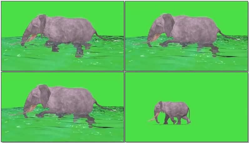 绿屏抠像奔跑游泳的大象视频素材