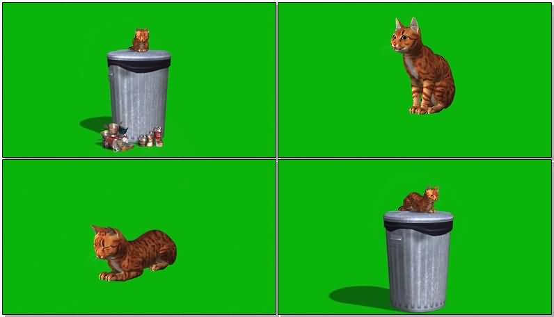 绿屏抠像流浪的野猫视频素材