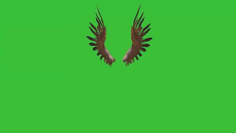 绿屏抠像挥舞的翅膀视频素材