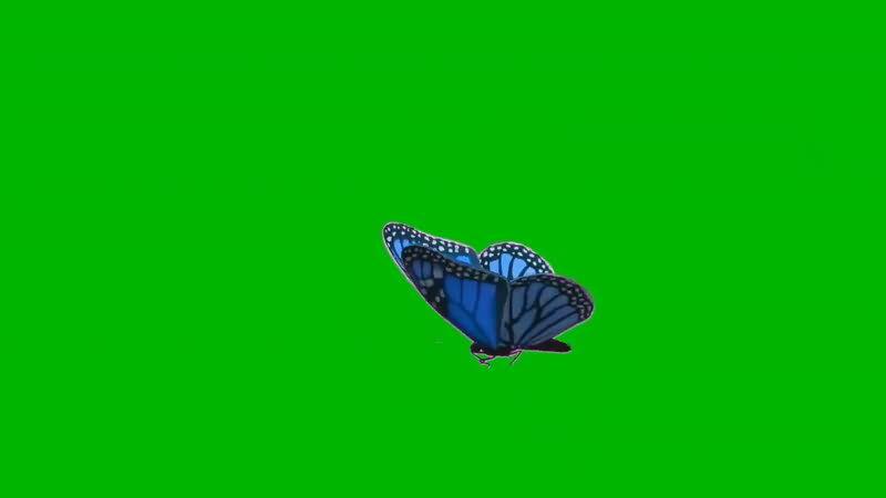 绿屏抠像飞舞的蝴蝶视频素材