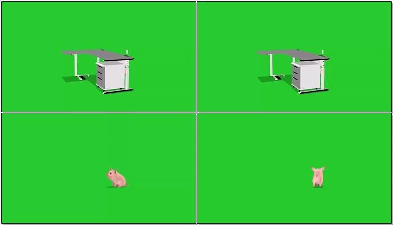 绿屏抠像粉色小猪.jpg