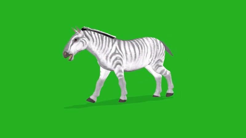 绿屏抠像斑马视频素材
