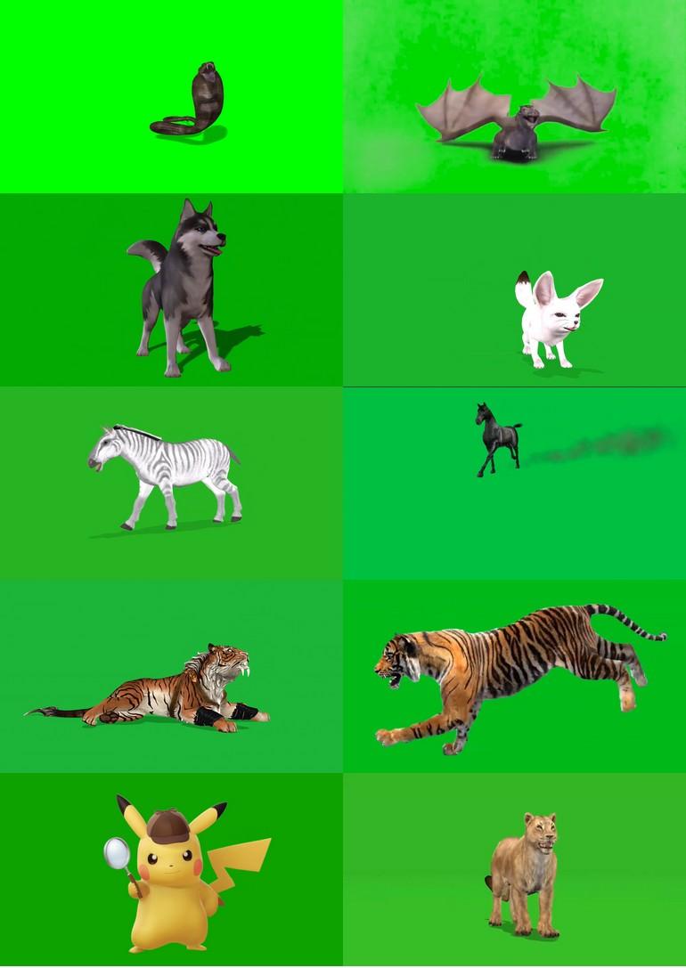 绿屏_绿布_绿幕动物|飞禽|走兽|鱼类|鸟类|生物视频素材打包100部第四套