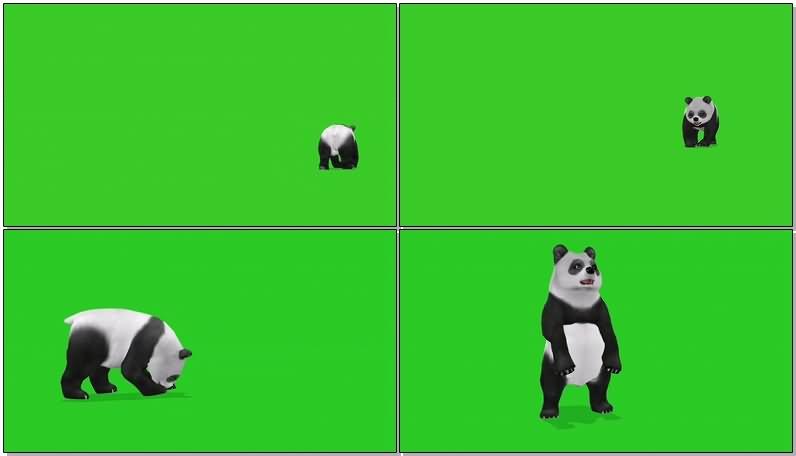 绿屏抠像大熊猫视频素材