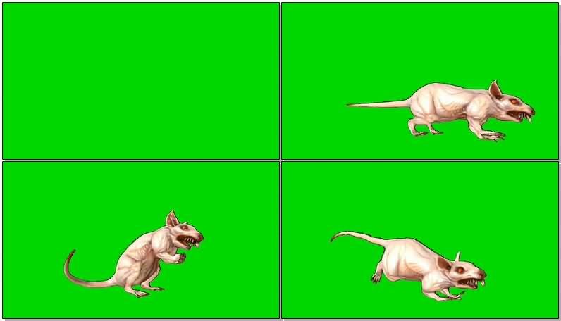 绿屏抠像变异老鼠视频素材