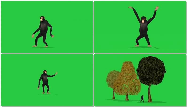 绿屏抠像黑猩猩视频素材