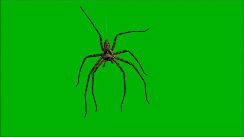 绿屏抠像蜘蛛.jpg
