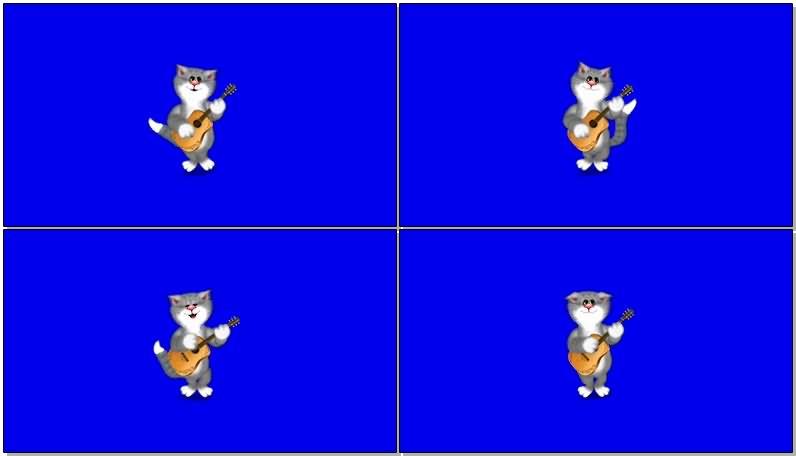 绿屏抠像弹琴的猫咪.jpg