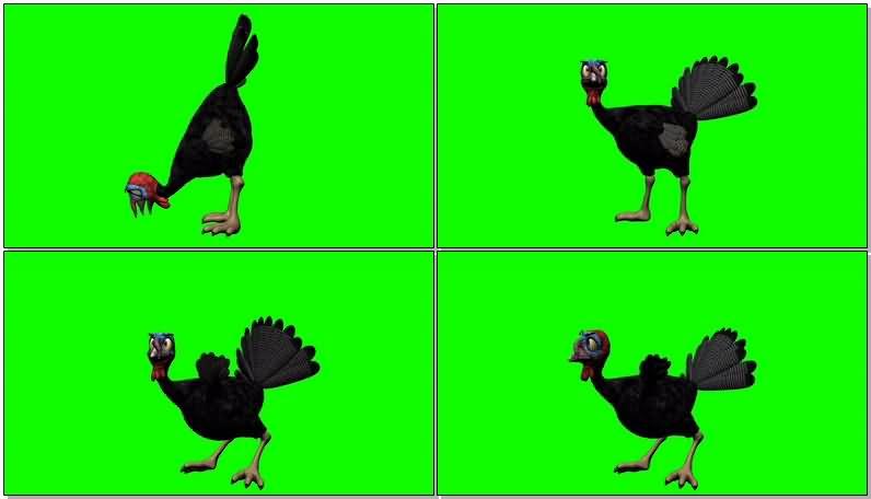 绿屏幕抠像卡通火鸡视频素材