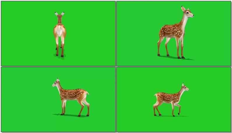 绿屏幕抠像梅花鹿视频素材