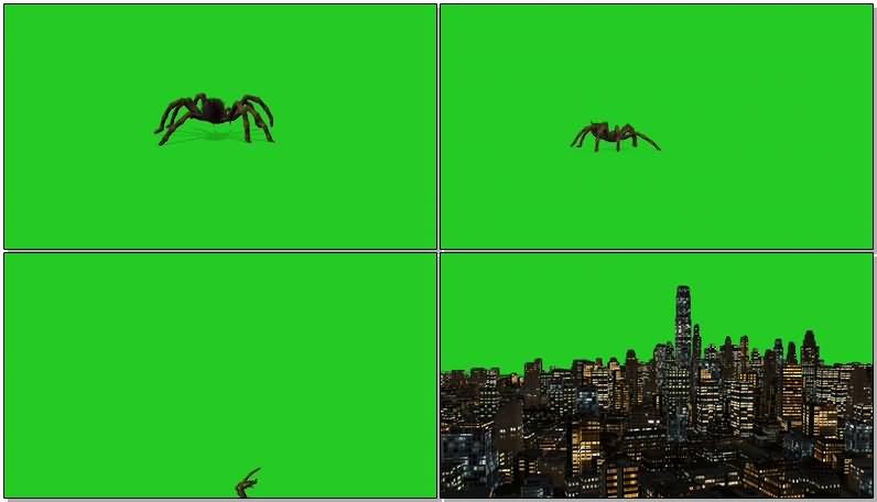 绿屏幕抠像巨型蜘蛛视频素材